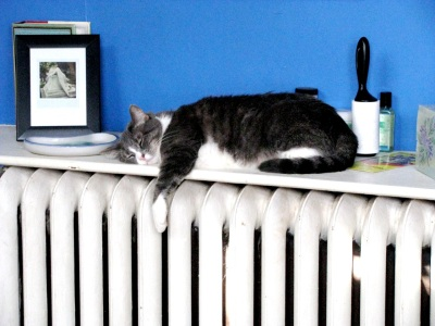 cat sleeping on heater